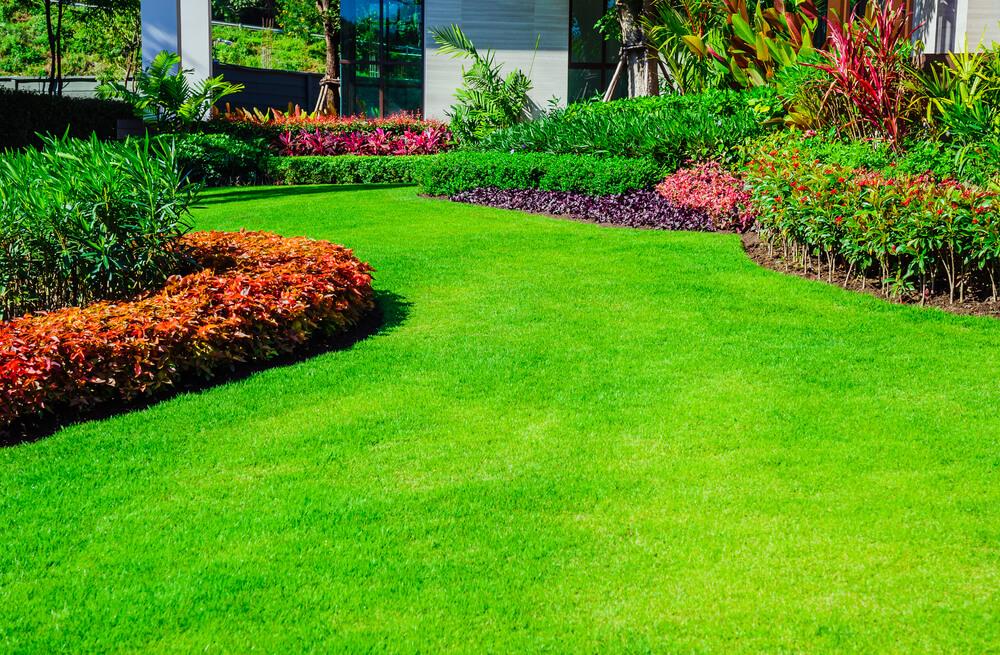 piekny trawnik